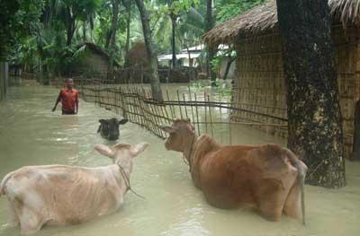 Bangladeshfloodingweb.jpg