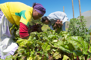 Princess (left) and Samantha are volunteers who have learned ecological farming techniques from staff at the Keiskamma Trust, and now share the bounty of their knowledge with other people living with HIV and AIDS in Hamburg, South Africa. Photo: Simon Chambers
