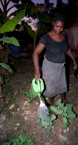 Renelia Demostene waters plants in her home garden in Bois Leger, Haiti.  Photo: Simon Chambers