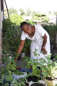 Elide Barthole working with her balcony garden in Haiti