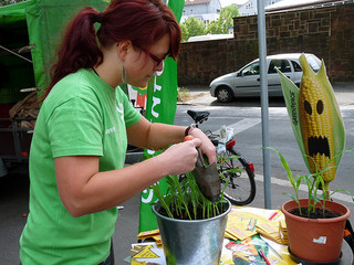 Preparing a bucket of corn seedlings in Germany. Photo: Greenpeace Marburg from Flickr