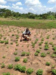 Petronila-Mbaga---Peanuts-farmer---Tanzania