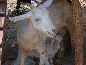 Sikitu and her kid. Photo: Dismas Menchi