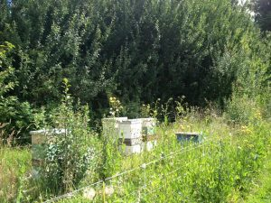 Bee hives at the farm act as pollinators