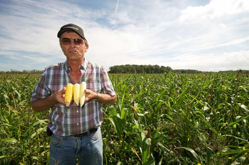 Larry Dyck displays several ears of corn from his drought-afflicted field at Grow Hope Niagara. Photo: Simon Chambers