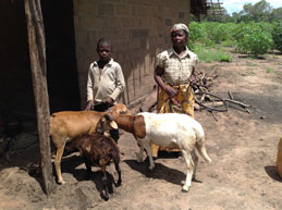 Agita (right) and her goats. Goat milk is an important nutritional staple for people living with HIV in Mozambique. Photo: Zaida Bastos.