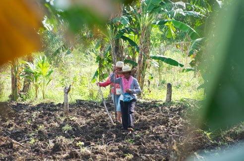 Milagros Ybanez and Haide Tiangzonplanting corn in Kampingganon barangay, Bantayan Island, Philippines. Photo: Simon Chambers
