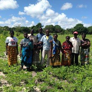 The peanut collective in their field. Photo: Zaida Bastos