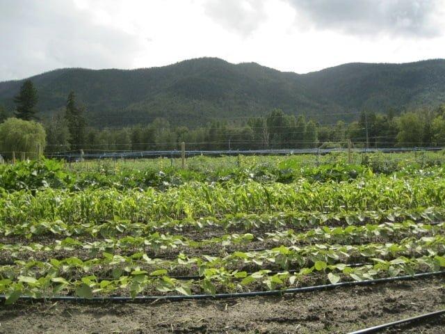 Sorrento Centre Sustainable Farm