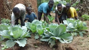 Kasiita and his siblings in their cabbage garden.